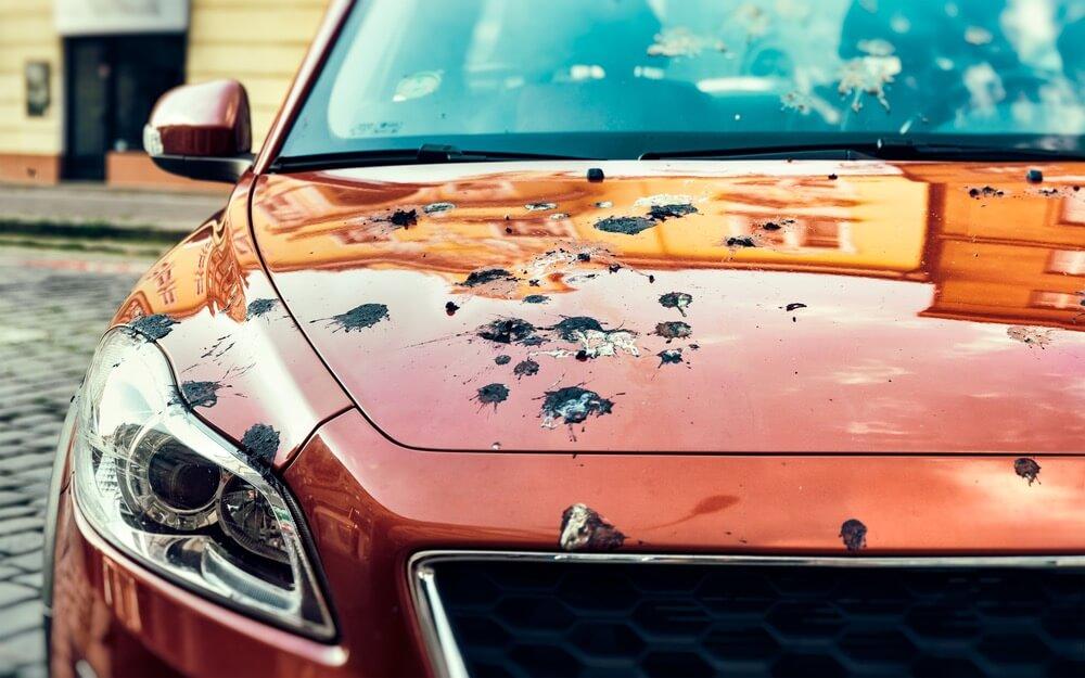 warna-mobil-dan-bahaya-tai-burung